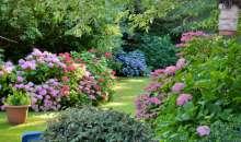 Jak zadbać o kwiaty w ogrodzie i szklarni – prawidłowe nawożenie