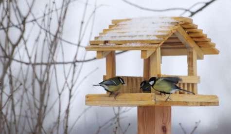 Czas na mądre dokarmianie ptaków