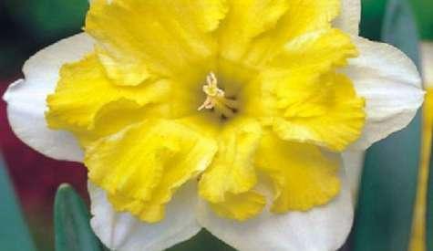 Cebulki kwiatowe jesienne - gatunki kwitnące jesienią