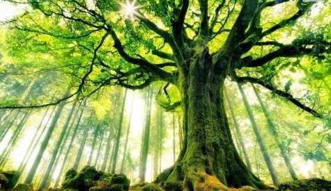 Sadzimy, a nie wycinajmy drzewa
