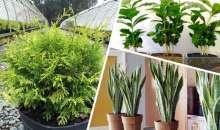 Rośliny, które powinniśmy posiadać we wnetrzach